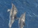 delfin10