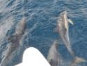 delfin5