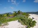 sandy-island55