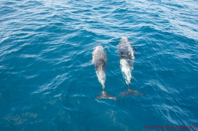 delfiner3