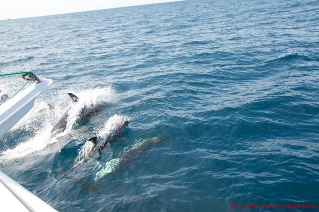 delfiner5