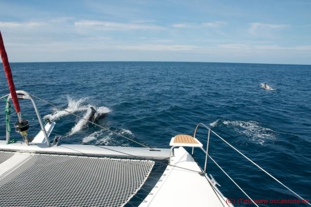 delfiner6