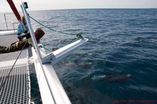 delfiner_barna