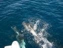 delfiner_barna8